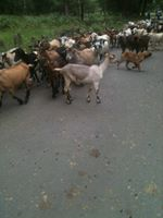Day 4 Traffic